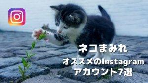 愛くるしいネコの写真がいっぱいのInstagramアカウント7選